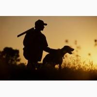 Регистрируем собак с выдачей охотничьего паспорта