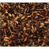 Семена суданской травы ГОЛУБОВСКАЯ 25 элита 1 репрод