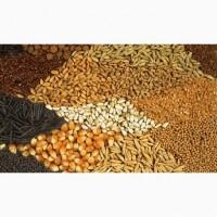 Куплю кукурудзу, фуражну пшеницю, сою