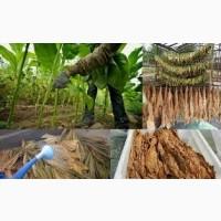 Супер Махорка-Самосад!табак разных видов и разной крепости