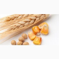 Кукурудза, фуражна пшениця, соя