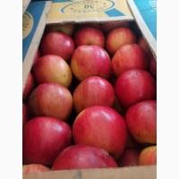 Продам яблука 1 і 2 сорту