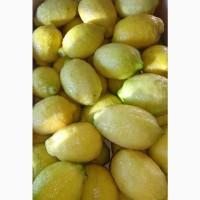Продам испанский лимон
