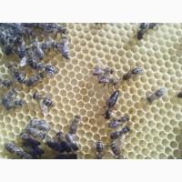 Бджоломатки-Карпатка 2019 року