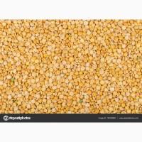 Переробне підприємство придбає пшеницю, ячмінь