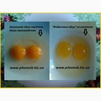 Перепелиные яйца - перепелов, домашние