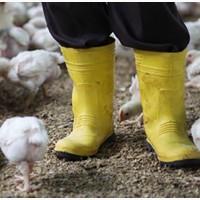 Требуются мужчины с открытой визой на птицефабрику в Чехии