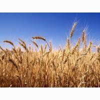 Постійно закуповуємо зерновідходи пшениці по всій території України