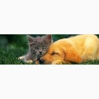 Оптовые поставки ветеринарных препаратов по всей Украине Veterinariya_info