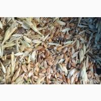 Закупаем зерноотходы зерновые, масличные, бобовые