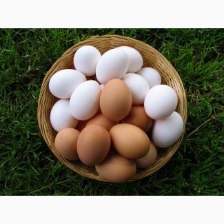Яйцо куриное, яичный порошок купить Днепр