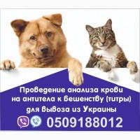 Анализ на бешенство Евросправка для собак титры на антитела Официально