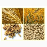 Закупівля зерновідходів! Працюємо з посередниками
