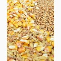 Продам зерно смеси