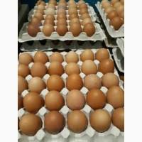 Яйцо куриное столовое все позиции