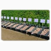 Семенной картофель элитных сортов. Отправляем почтой от 10 кг