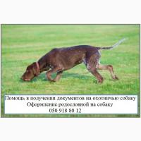 Как оформить собаку для охоты Документы на право охоты с собакой охотничьей породы