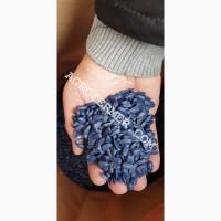 Семена подсолнечника LEBRON, канадский трансгенный гибрид